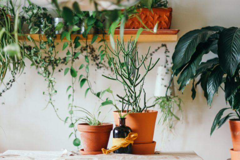Rośliny, kwiaty oczyszczające powietrze w domu. Jakie wybrać?