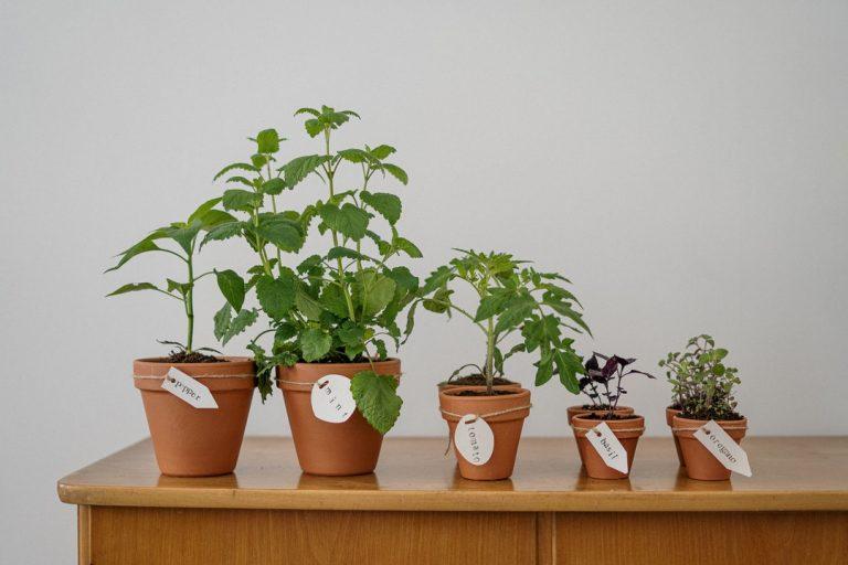 Domowy zielnik – jak uprawiać zioła na balkonie i parapecie?