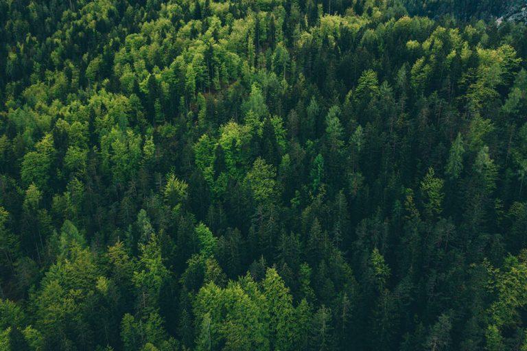 Zachowanie w lesie – biwakowanie, ognisko i inne zasady
