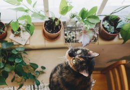 kot i rośliny
