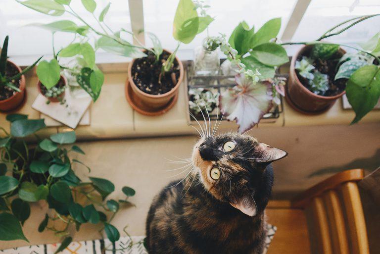 Rośliny doniczkowe trujące dla kota, psa i innych zwierząt
