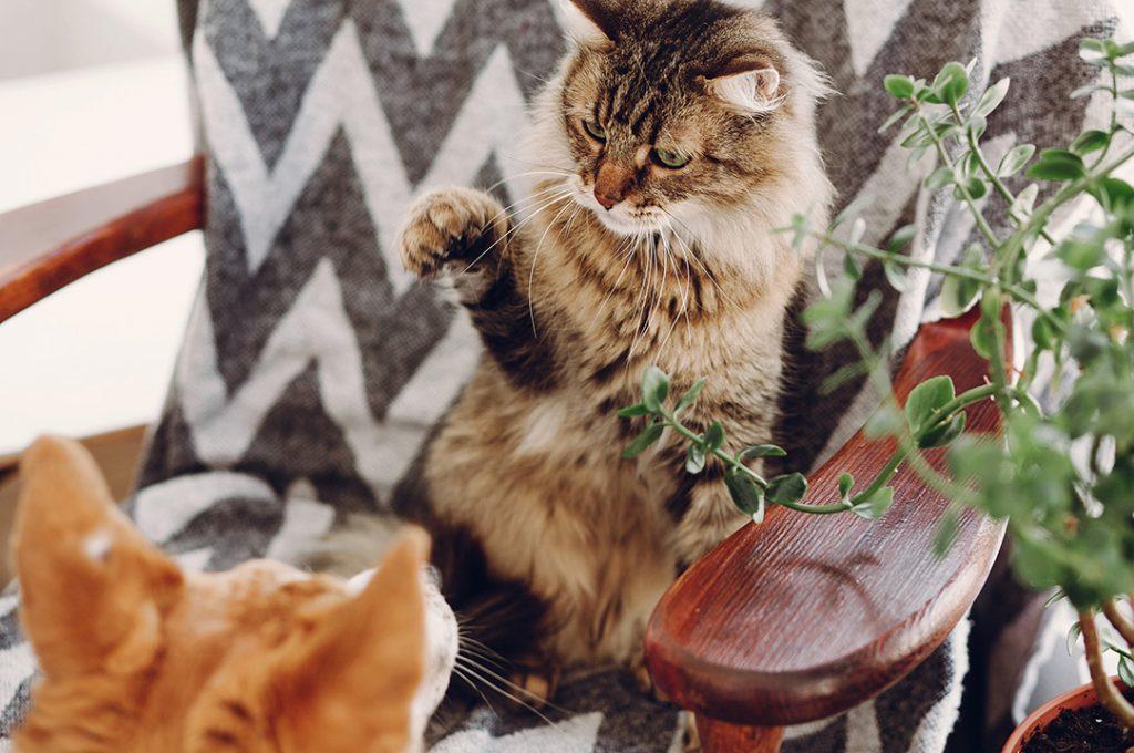 koty w domu