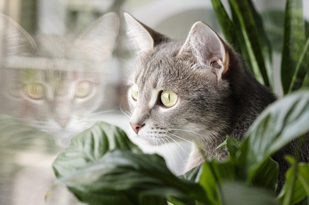 kot i kwiaty