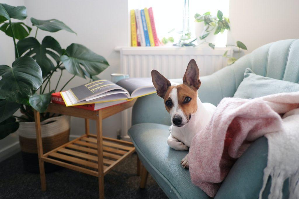 pies na kanapie