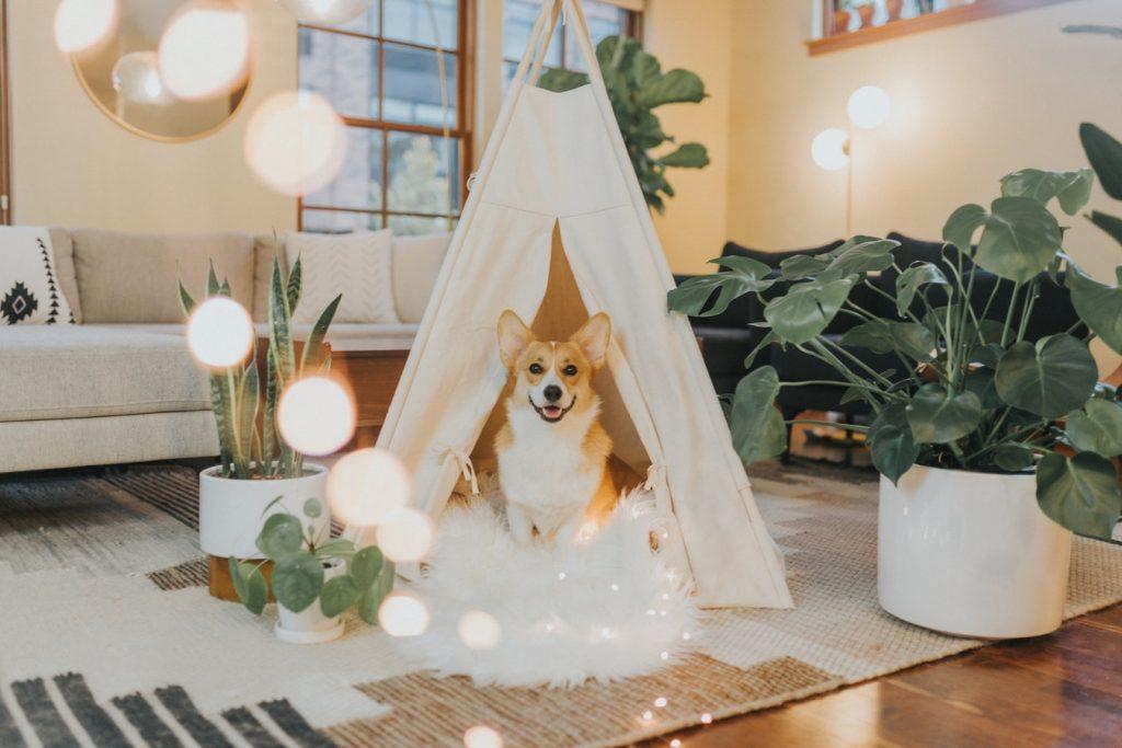 pies w namiocie